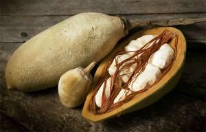 le pain de singe, le fruit du baobab riche en antioxydant puissant