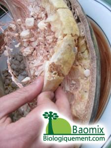 Intérieur du fruit du baobab bio, pulpe de baobab